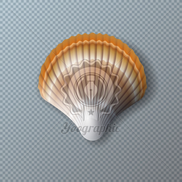 Vector Illustration with Beautiful Shell Isolated on Transparent Background. Vector Nature Sea Design Elemets with Realistic Marine Mollusk Seashell for Banner, Flyer, Invitation, Brochure, Party Poster or Greeting Card. - Royalty Free Vector Illustration