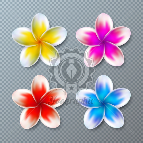 Vector Illustration with Colorful Plumeria Flower Collection Isolated on Transparent Background. Vector Holiday Design Elemets with Hawaiian Tropical Flowers Set for Banner, Flyer, Invitation, Brochure, Party Poster or Greeting Card. - Royalty Free Vector Illustration