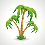 Vector illustration of the palm trees width coconuts.