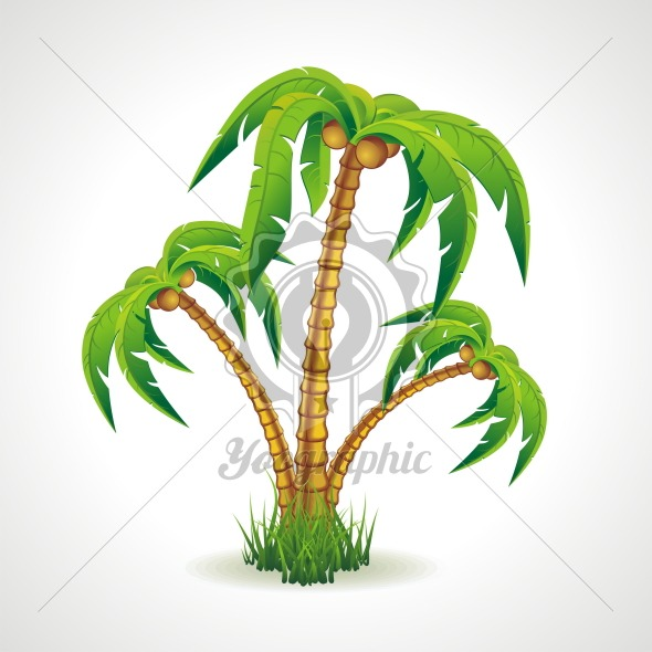 Vector illustration of the palm trees width coconuts. - Royalty Free Vector Illustration
