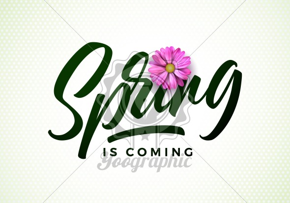Vector spring is coming illustration with beautiful pink flower on white background. Floral design template with typography letter for greeting card or promotional banner. - Royalty Free Vector Illustration